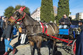 Horse carriage for tourists in Rome, Italy