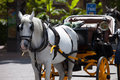 Horse carriage traditional taxi service white with for passenger transportation Royalty Free Stock Photo