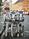 Horse cart Royalty Free Stock Photo