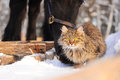 Horse and cat friends black in winter Royalty Free Stock Images