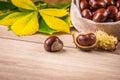 horse chestnut Royalty Free Stock Photo