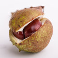 Horse chestnut view of a fallen that has split open to reveal the nut inside Stock Images