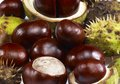 Horse chestnuts some in light back Stock Photography
