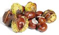 Horse chestnuts some in white back Stock Image