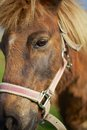 Horse Close Up Royalty Free Stock Images