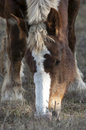 Horse close up of a Royalty Free Stock Photography
