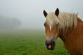 Horse close up with fog Royalty Free Stock Photo