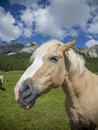 A horse close up of in the italian alps Stock Images
