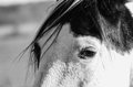 Horse closeup a black and white of a s beautiful eyes Stock Images