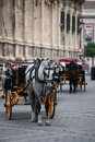 Horse coach white in piazza spain Stock Images