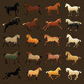 Horse coat colors equestrian illustrations of common coloring Royalty Free Stock Image
