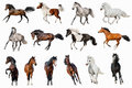 Horse collection isolated