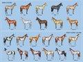 Cavallo grafico