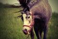 Horse coming towards the camera Royalty Free Stock Photo