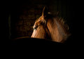 Horse in dark stable Royalty Free Stock Images