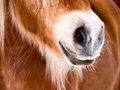 Horse detail (85) nose and nostrils Stock Image