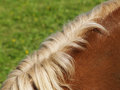 Horse detail close up mane side view Stock Image