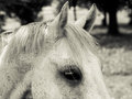 Horse detail head and eye old look Royalty Free Stock Photography