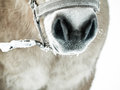 Horse detail nose nostrils and mouth front view monochrome image Royalty Free Stock Photography