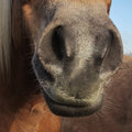 Horse detail nose nostrils and mouth front view quadratic Stock Photos