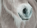 Horse detail nose nostrils and mouth front view side view Royalty Free Stock Photos