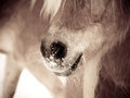 Horse detail nose nostrils and mouth front view side view sepia Stock Photo