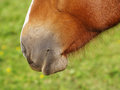 Horse detail nose nostrils and mouth side view Royalty Free Stock Photography