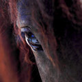 Photo : Horse