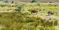 Horse and donkey grazing on green pasture in portugal Stock Photography