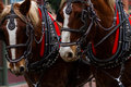 Horse-drawn wagon ride Royalty Free Stock Photo