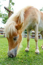 Horse eat green grass in pasture photo stock Stock Image