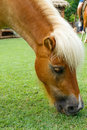 Horse eat green grass in pasture photo stock Stock Photography