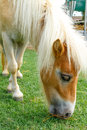 Horse eat green grass in pasture photo stock Royalty Free Stock Image