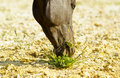 Horse eat a small tuft of green grass brown Royalty Free Stock Photos