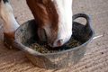 Horse eating feed from a bucket Royalty Free Stock Photo