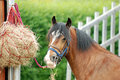 Horse eating hay Stock Photos