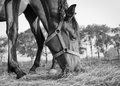 Horse, Eating, Hay, Low Angle, Desaturated