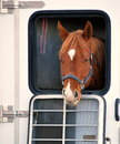 Horse expressions inside a transport trailer Royalty Free Stock Image