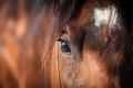 Horse eye bay closeup detail Royalty Free Stock Photos