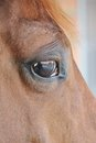 Horse eye close up detail with reflection of yard a horses head me and the on Stock Image