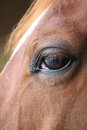 Horse eye close up detail with reflection of yard a horses head me and the on Stock Photo