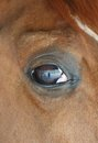 Horse eye close up detail with reflection of yard a horses head me and the on Royalty Free Stock Photo