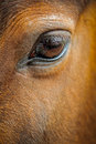 Horse eye close up of s Stock Images