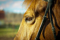 Horse eye close up of a s Stock Photography