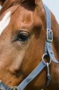 Horse Eye Closeup Royalty Free Stock Photo