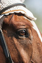 Horse eye detail of a beautiful head focused on the Stock Photography