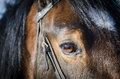 Horse eye detail of a brown horses Royalty Free Stock Photos