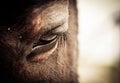 Horse Eye Royalty Free Stock Photo