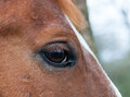 Horse eye macro shot of chestnut Royalty Free Stock Images