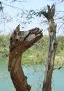 Horse facial appearance dead tree funny photo Stock Photo